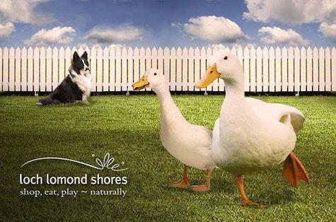 Drakes of Hazard dog & duck show, Loch Lomond Shores