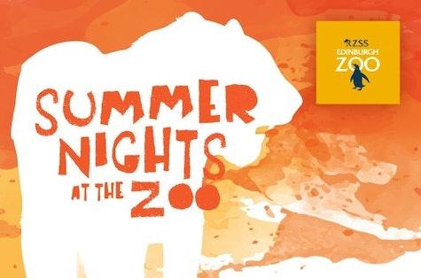 Summer nights at the Zoo