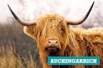 Auchingarrich Wildlife Centre family ticket