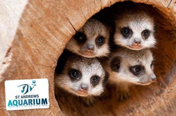 St Andrews Aquarium family pass & feeding experiences