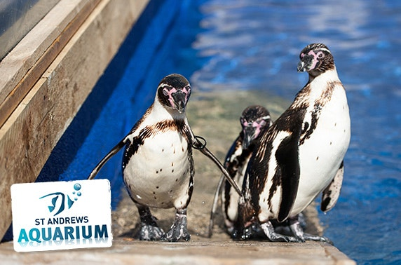 St Andrews Aquarium feeding experiences