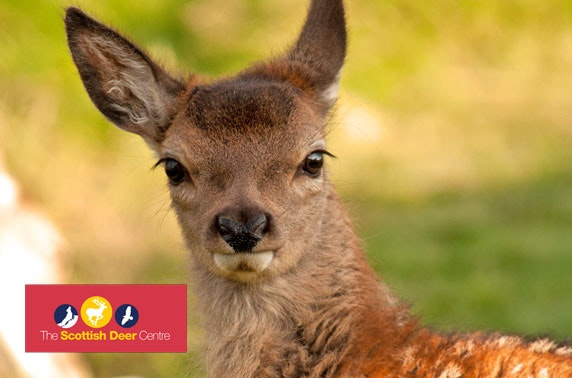 The Scottish Deer Centre passes - from £3.40pp
