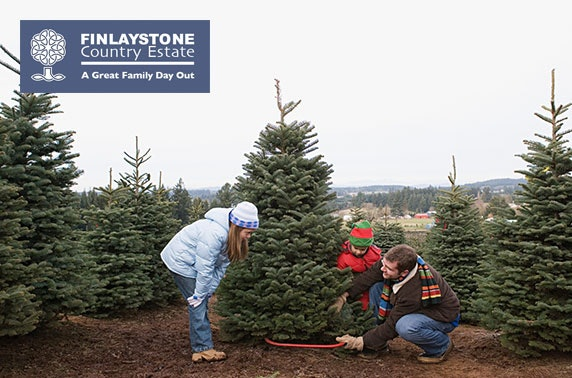 Real Christmas trees, Finlaystone Country Estate