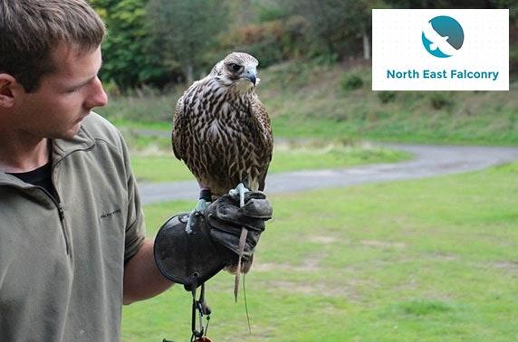 North East Falconry hawk walks, Tyne & Wear