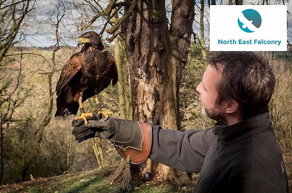 North East Falconry hawk walks, Tyne & Wear