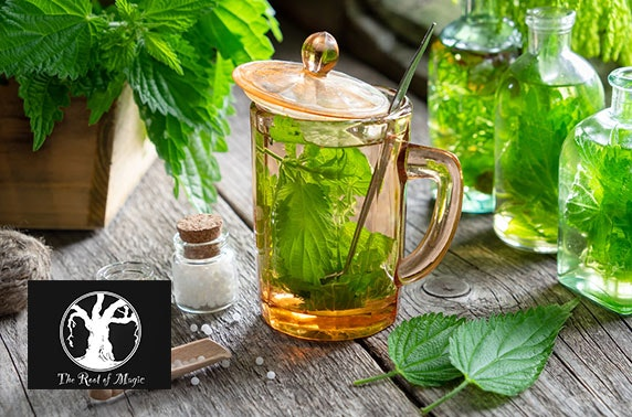 Adult potions workshop, The Root of Magic