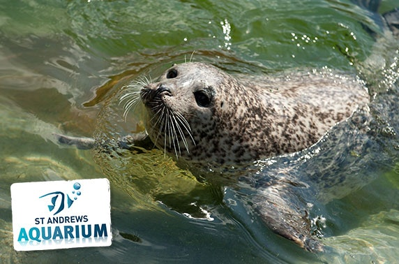 Adopt a meerkat, seal or penguin with St Andrews Aquarium