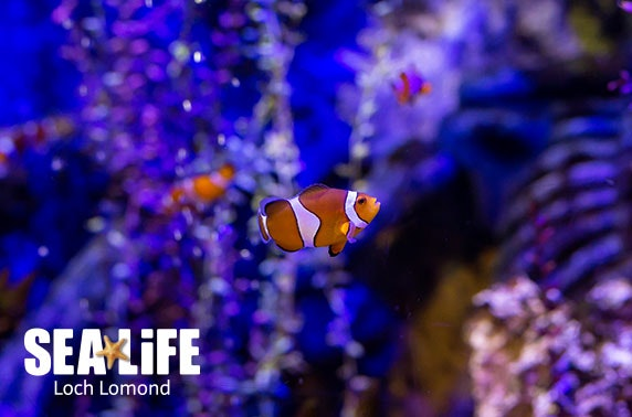 SEA LIFE Loch Lomond Aquarium - valid 7 days inc Easter holidays!