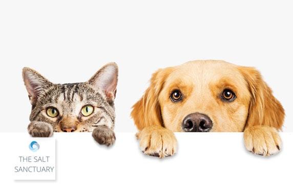 The Salt Sanctuary pet therapy